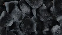 Bordás rózsaszirom fekete (100 db)-dm
